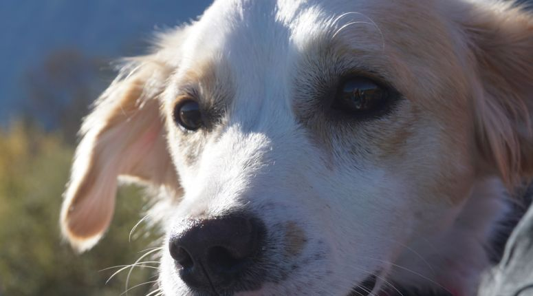Kast 130 Breed : Urlaub mit hund im allgäu pfronten